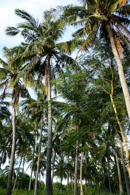 Gili Inseln Bali
