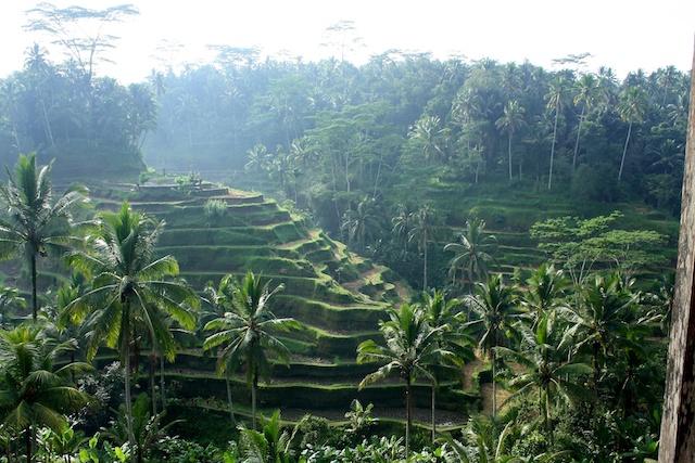 Reisterrasse in Ubud